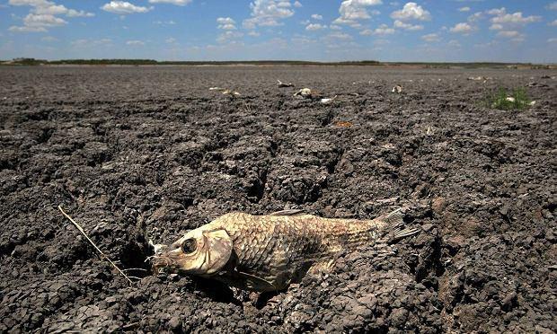 katastrofa wielkopolskich jezior !!! z aferą w tle